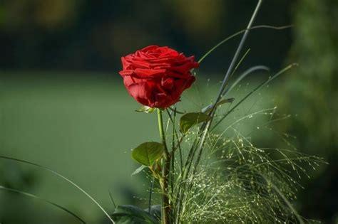 We did not find results for: 50 Gambar Bunga Mawar, Terlengkap 2017! (Warna Putih, Ungu, Pink, Hitam dan Hijau) | Salamadian.com