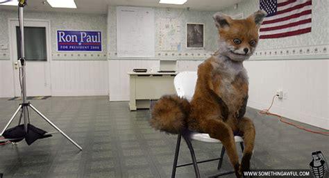 Taxidermy Fox Meme - bad taxidermy