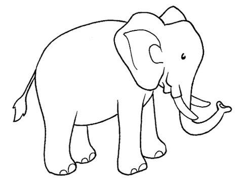 midisegni animali da colorare  immagine elefante da