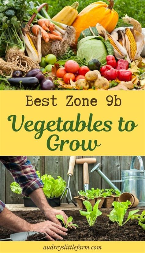 zone 9b vegetables grow plant growing later planting vegetable