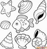 Coloring Shell Pages Shells Sea Seashells Printable Clam Seashell Beach Sheets Template Clipart Templates Clip Adults Oyster Getcolorings Popular Obrazku sketch template
