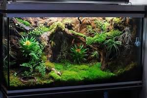 terrarium design vivarium design by dr terrarium terrariums pet ideas snake tanks
