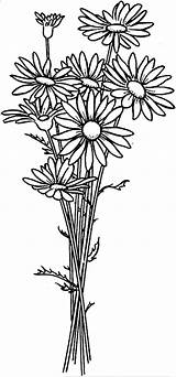 Daisy Coloring Flower Arrangement Pages Flowers Print Drawing Simple Colouring Sheets Printable Spring Nature Designs Colornimbus sketch template