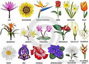 How Many Flowers Species Are There In The World | Types of ...