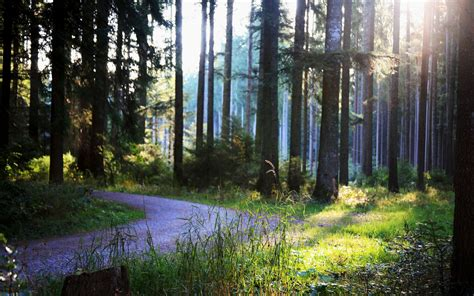 forest, Trees, Path Wallpapers HD / Desktop and Mobile ...