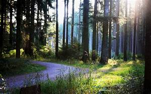 Forest, Trees, Path, Wallpapers, Hd, Desktop, And, Mobile