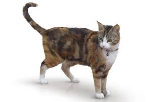 how much to board a cat your cat s language kittycat kittycat
