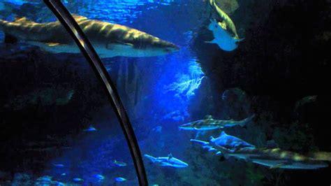 Sea World San Diego Shark Tank Youtube