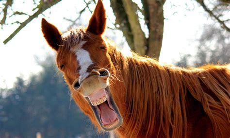 dem pferd aufs maul geschaut panorama nachrichten