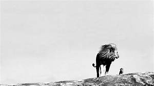 Jungle King Lion wallpapers | Black and White Photography