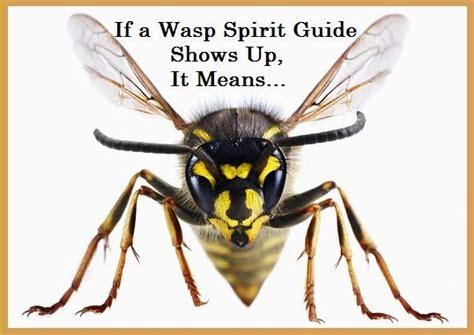 animal spirit guides images  pinterest animal