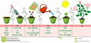 Instructions On How To Plant Flower In Sequence Of Steps