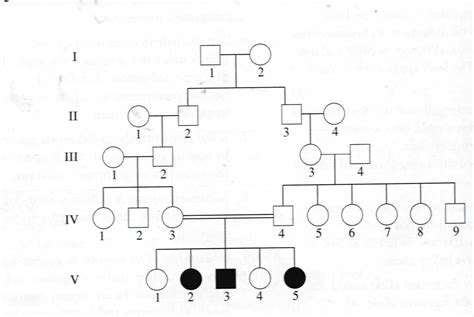 Family Will Template by Genetic Family Tree Template Search Family
