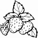 Strawberry Coloring Fruits sketch template
