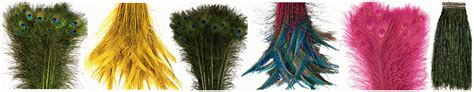 Bulk Feathers For Sale  1000s Of Craft Feather Styles
