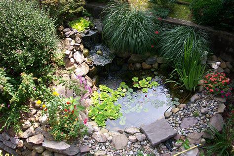 small backyard pond surrounded  stone
