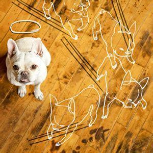How to Repair Dog Damage to Wood Flooring   Wood Floors