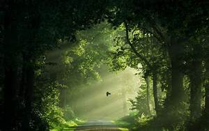 Wallpaper, Sunlight, Trees, Landscape, Birds, Nature, Grass, Sky, Road, Branch, Green, Morning