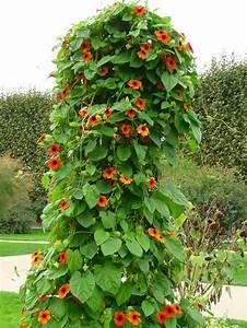 Support Plantes Grimpantes : plante grimpante sans support id e innovante ~ Dode.kayakingforconservation.com Idées de Décoration
