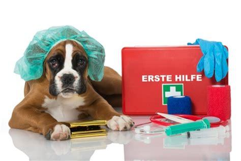 hunde op versicherung versicherungsgeizkragende