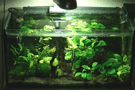 les crevettes d eau douce aquariums de v 233 ronique