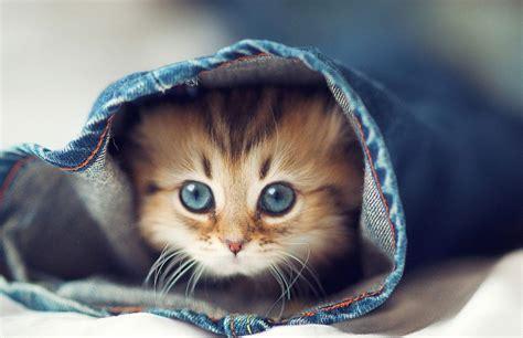 Cute Kittens Wallpapers New Tab Tabifyio