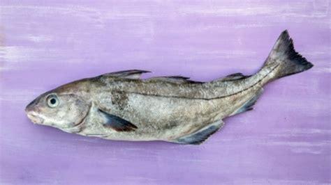 cuisiner le haddock fumé recette pour cuisiner l 39 aiglefin haddock conseils de
