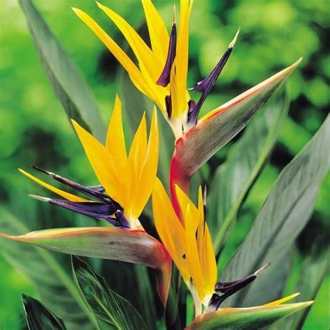 53 best images about opvallende bloemen en planten on