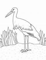 Coloring Stork Printable Museprintables Popular Bird sketch template