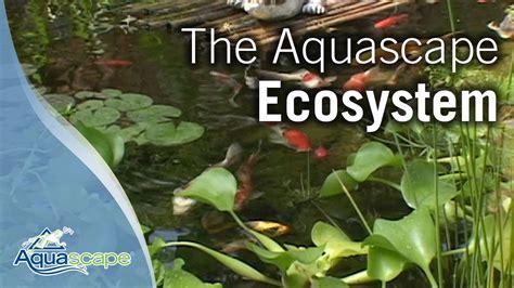 Aquascape Ecosystem by The Aquascape Ecosystem