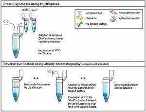 Purexpress In Vitro Protein Synthesis Kit  E6800