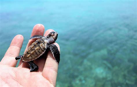 incredible pictures  sea turtles reckon talk