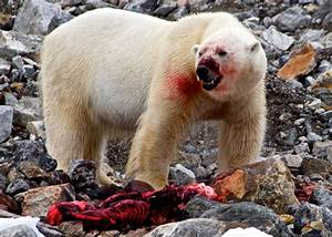Backgrounder: the Arctic Council – James Thomson
