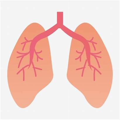 Lung Cartoon Clipart Organ Animated Clip Lunges