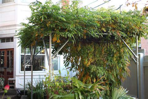 wisteria trellis design how to build a wisteria support trellis and pergola great idea design and pictures