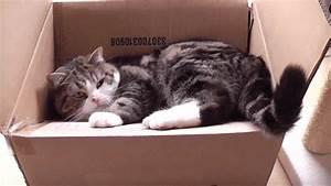 Coussin Tete De Lit Gifi : top gifs cat 142 gifs anim s dr les de chats images ~ Dailycaller-alerts.com Idées de Décoration