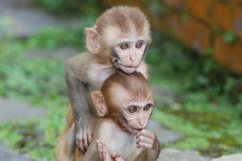 monkey controls limb movements  avatar   mind