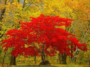 only nature beautiful tree wallpapers