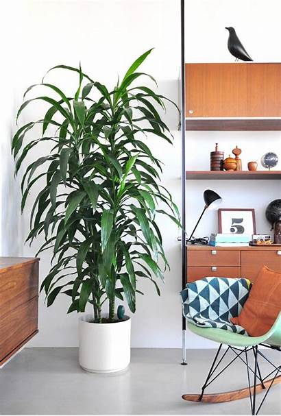 Plants Indoor Interior Plant Modern Styling Tall