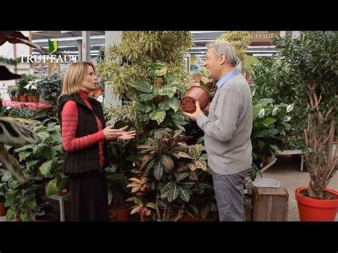 quel pot choisir pour vos plantes d int 233 rieur jardinerie truffaut tv
