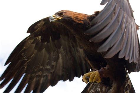 golden eagle channel islands national park