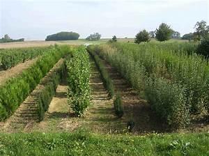 Arbres Fruitiers Nains En Pleine Terre : ppinires chouvenc prsentation pepiniere pepinieriste ~ Premium-room.com Idées de Décoration