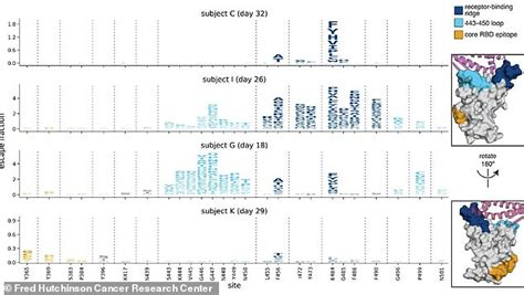 Brazilian coronavirus variant may weaken vaccines' effects ...