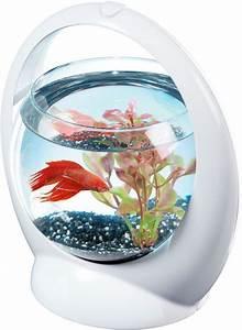 Aquarium Boule Design Poisson Combattant