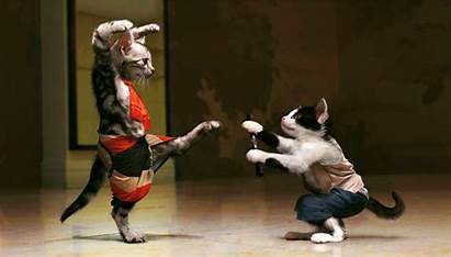Funny Wallpapers Cats Cat