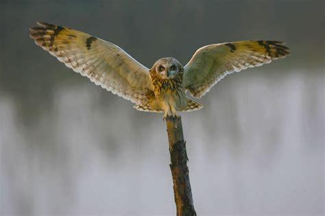 owl storytelling la contrombreggiatura barbagianni gufi