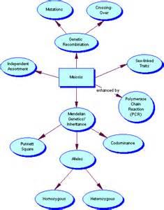 Meiosis Concept Map