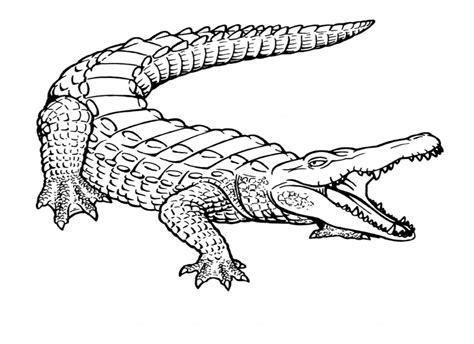 printable crocodile coloring pages  kids