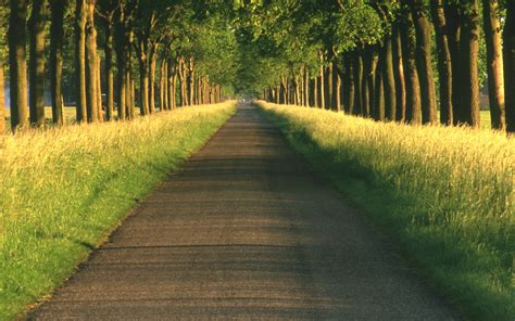 path hd wallpaper and background image 2560x1600
