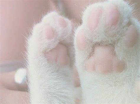pin by shatha thaher on pink paws cat aesthetic